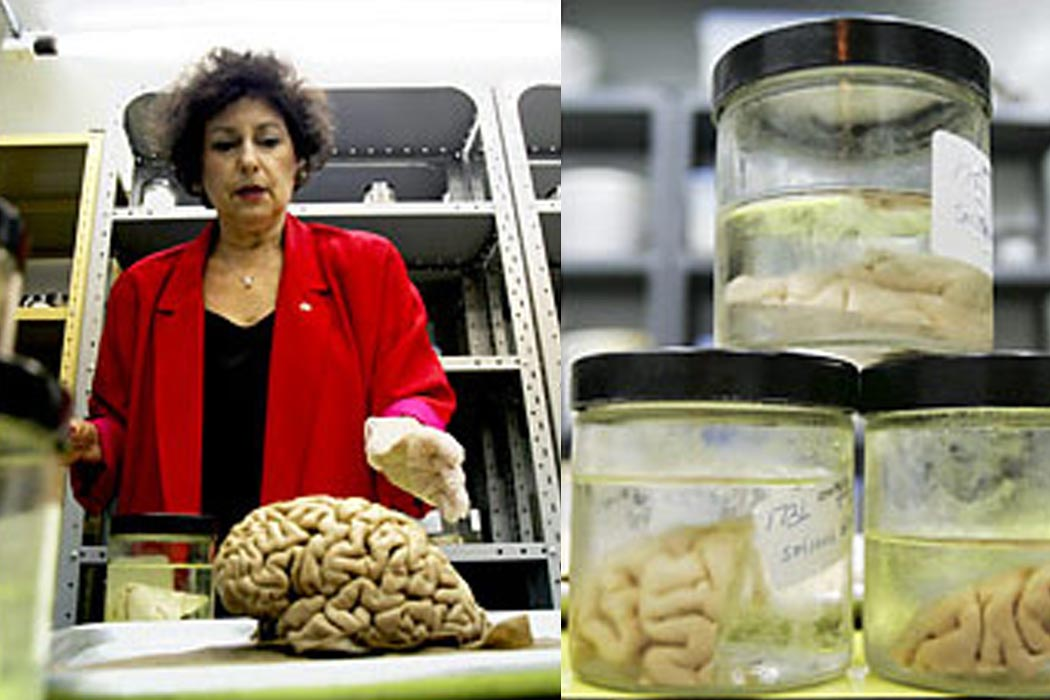 Witelson in her brain bank, by Jim Ross for the New York Times